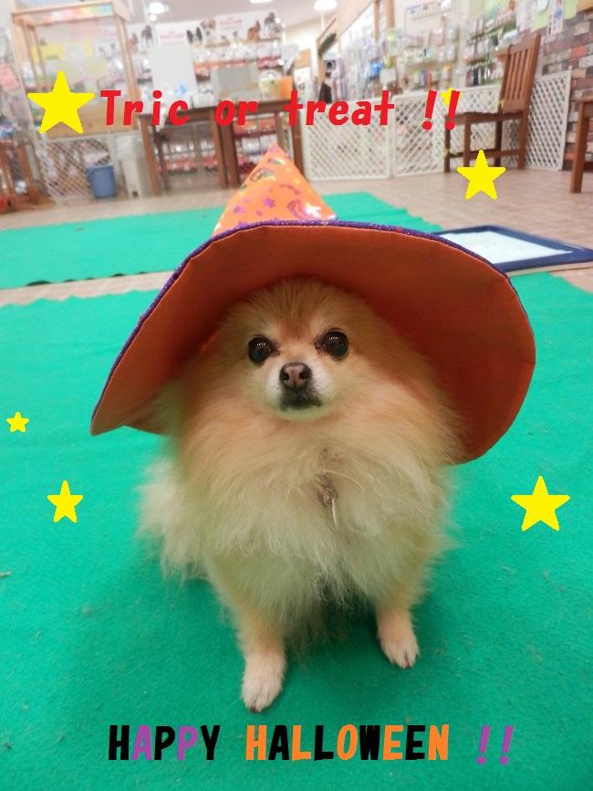 Halloween★★★