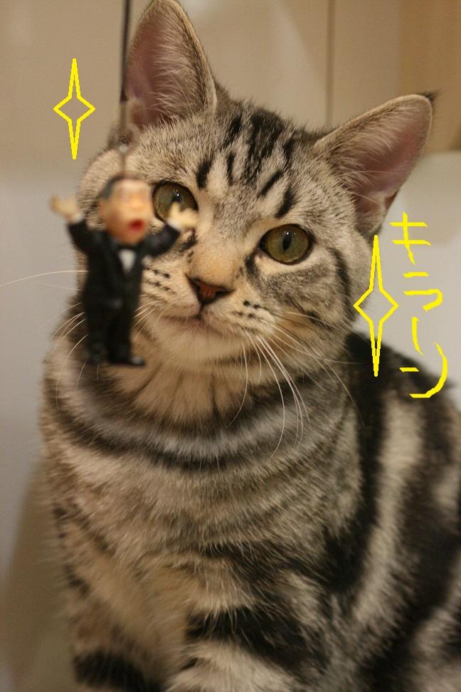猫ちゃんに〇〇を渡したら・・・