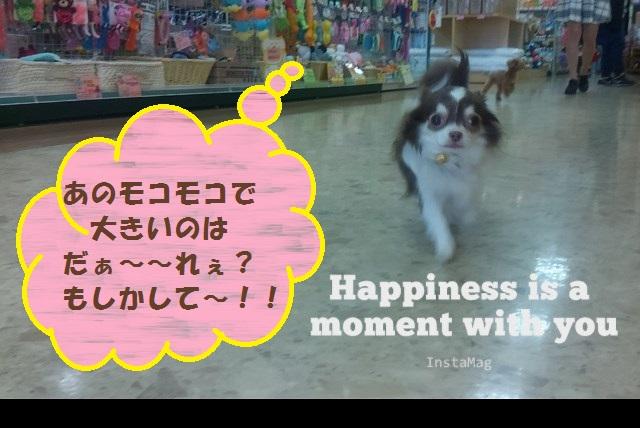 おかえり~秋田犬vUo・ェ・oU ィェーィ♪