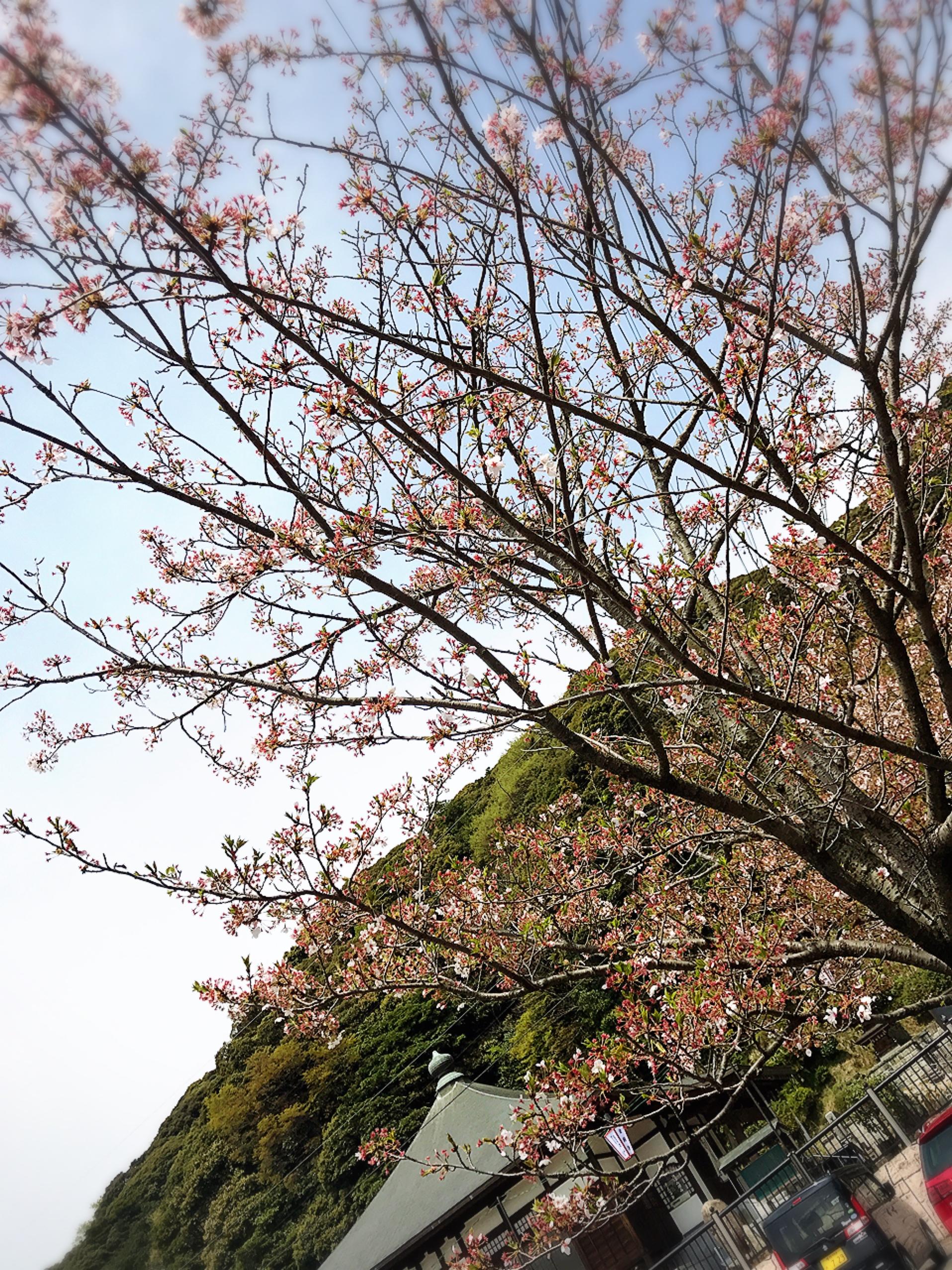 春だ!!おでかけだ*^^)v