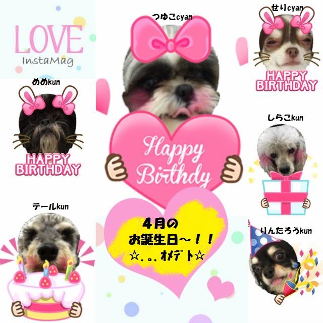 4月の誕生日のwith犬.*・゚☆ндрруヾ(*^▽^*)ノвiятнDду☆゚・*.