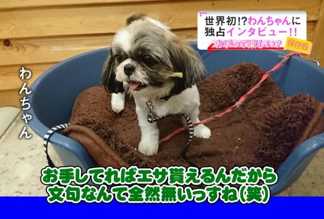 示野店パピ~cyanの紹介だよ(o^∇^o)ノ