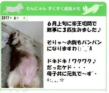 せりcyanパピー報告(・Ω・)ノ チワー!! からの~おかえり~~ヽ(▼o▼) オイッス!!