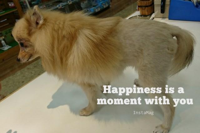 気になるあの子@(´ェ`o)@ &示野店に可愛い過ぎるライオンが!