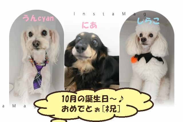 with犬=10月の誕生日おめでと♪ & ハットとニット帽