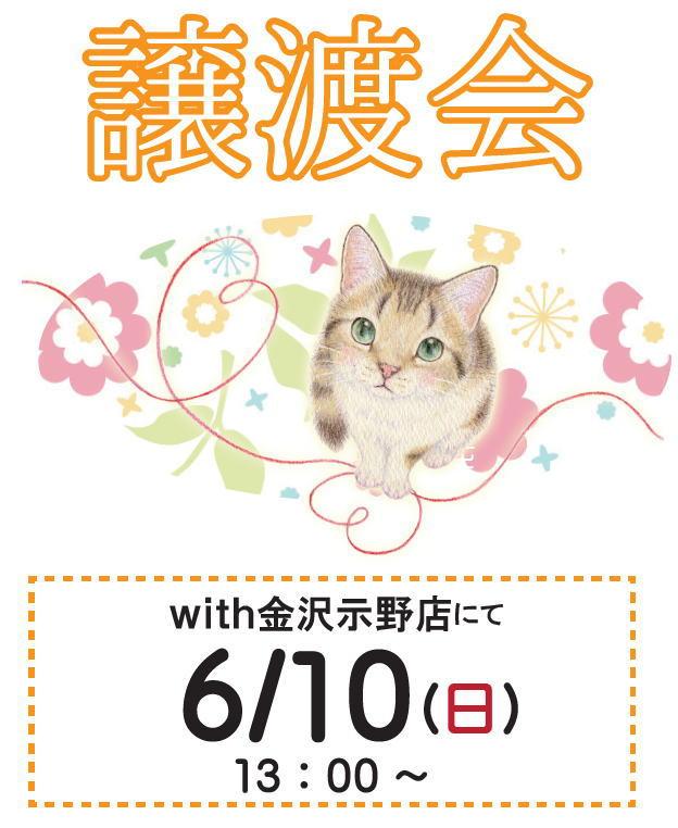 猫の譲渡会*お知らせ