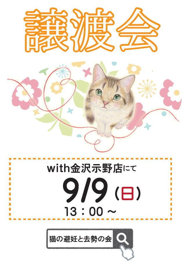 猫の譲渡会お知らせ