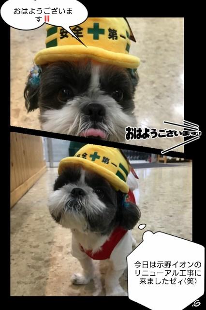 ワンちゃん作業着!着てイオンタウン示野のリニューアル工事だ!!!