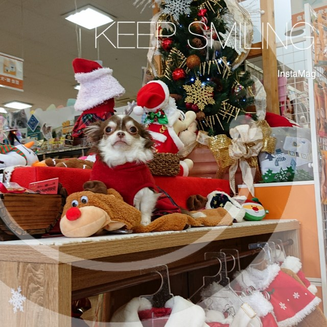 ?今年のクリスマスは?