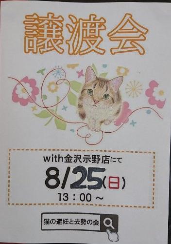 8月25日 猫のこまりごと相談お知らせ