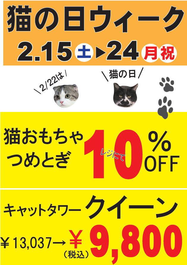 猫の日ウィーク(=^・^=)