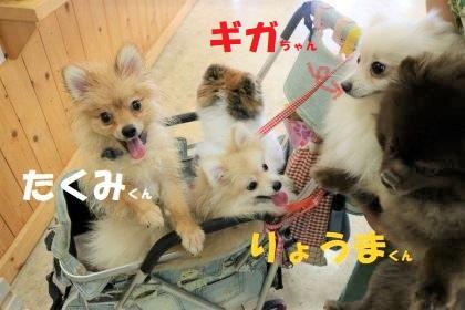 ギガちゃん子とギガちゃん再会(*^-^*)