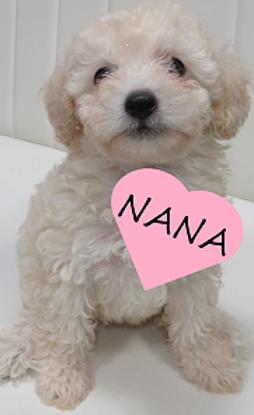 NEWマスコット犬♪