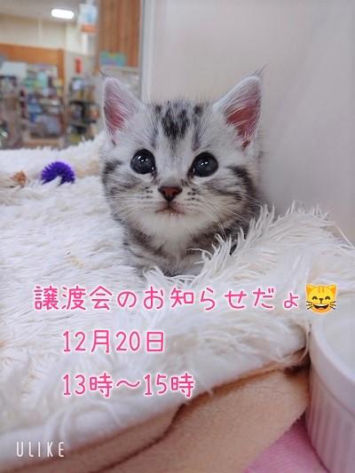猫ちゃん譲渡会のお知らせです♪