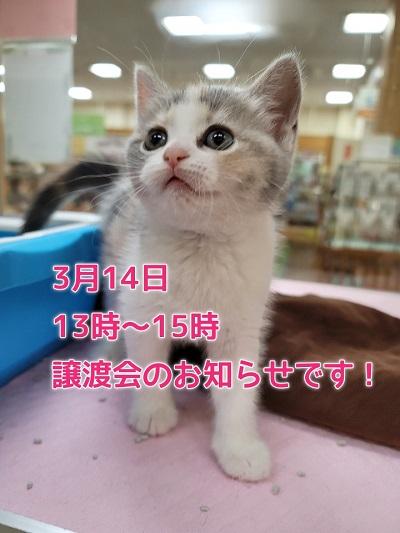 猫と避妊と去勢の会さんの譲渡会のお知らせです!