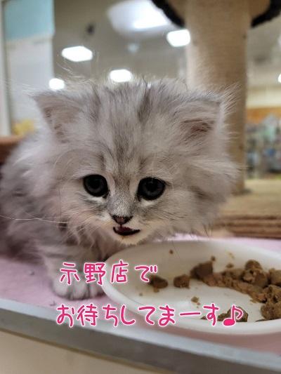 猫の困りごと相談ฅ(^ω^ฅ) ニャ~ ᗦ↞◃ ᗦ↞◃ ᗦ↞◃ ᗦ↞◃